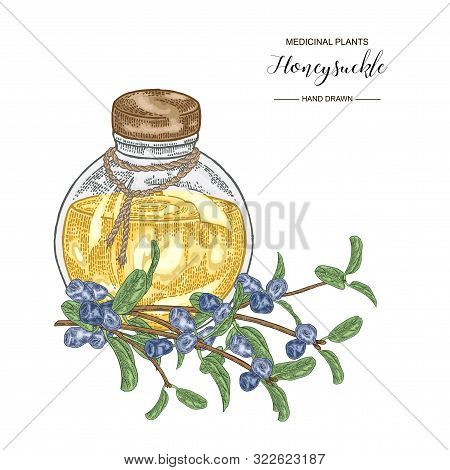 Honeysuckle Branch With Ripe Berries And Glass Bottle. Lonicera Japonica. Medical Plants Hand Drawn.