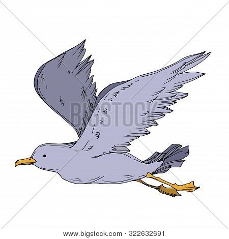Vector Sky Bird Seagull Isolated. Black And White Engraved Ink Art. Isolated Seagull Illustration El