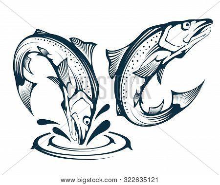 Jumping Salmon Fish. Illustration Of An Atlantic Salmon. Jumping Fish. Alaskan King Salmon. Sea Fish