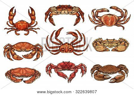 Crab And Lobsters Seafood Isolated Sketches. Vector Marine Crustacean Hermit, Hairy And King, Opilio
