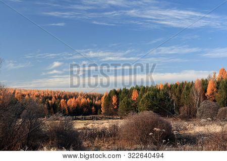 Taiga Sibirian In The Irkutsk Region, Russia