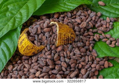 Cocoa Beans And Cocoa Fruits On Wooden, Cocoa Concept