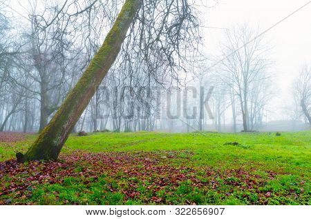 Autumn foggy landscape. Autumn park trees and fallen autumn leaves on the ground in the autumn park in foggy autumn October day