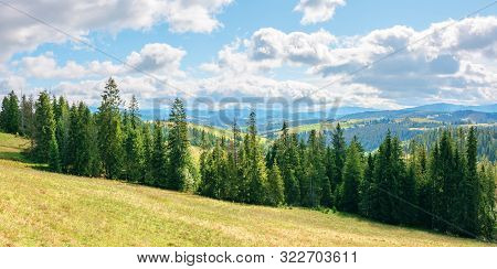 Coniferous Forest On The Grassy Hill. Great Panoramic View In To The Distant Gorgany Ridge. Wonderfu