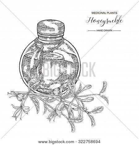 Honeysuckle Branch With Flowers. Lonicera Japonica. Medical Plants Hand Drawn. Vector Botanical Illu