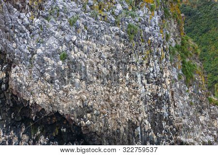 Close Up Of A Cliff At The Entrance To The Pacific Ocean Full Of Countless Seagulls Nesting And Hatc