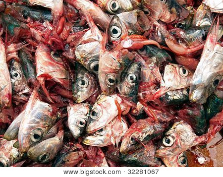 Decapitated sardines