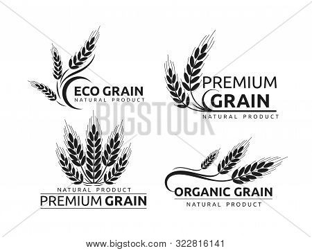 Premium Grain Flat Vector Logotype In Black Silhouette Designs Set. Organic Cereal Crops, Natural Pr