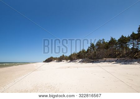 Coast With The Pine Trees