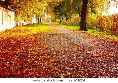 Fall sunny landscape. Fall park trees and fallem autumn leaves on the ground along the park alley in sunny fall October evening