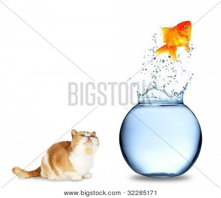 Cat watching golden fish jumping out of aquarium, isolated on white background