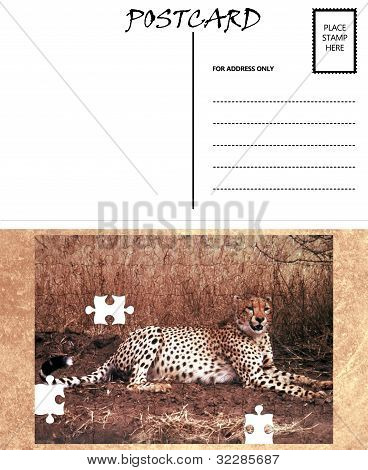 White Empty Postcard Template with Copy Area with Cheetah Puzzle Image poster