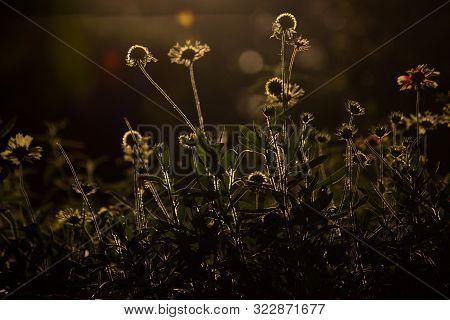 Gerbera Flower Is A Genus Of Plants In The Asteraceae. It Was Named In Honour Of German Botanist And