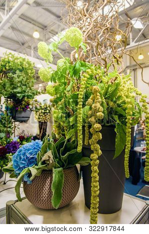 High Bouquet Of Amaranth And Hydrangeas Color Ufo Green, Decorated With Branches Of Exotic Vines. No