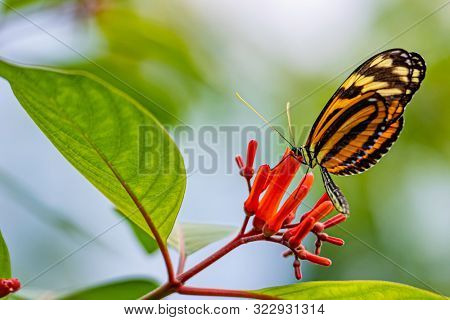 Close up of exotic butterflies