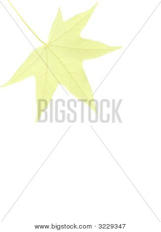 Note Paper With Sweetgum Leaf - Yellow
