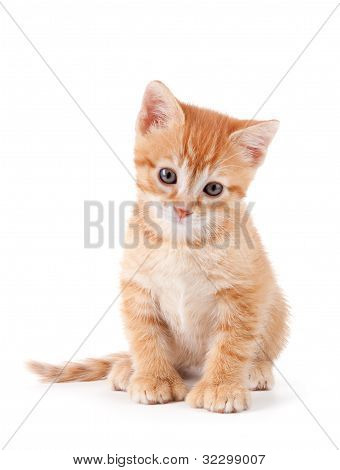 Cute orange kitten with large paws