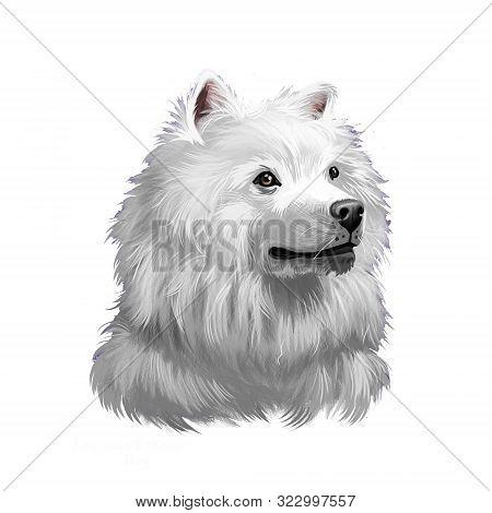 American Eskimo Dog Digital Art Illustration Isolated On White. Eskimo Spitz German Spitz. Eskie Of