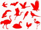 Birds silhouette to represent different species in nature poster