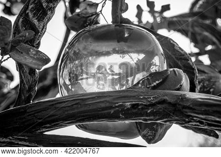 Artificial Translucent Apple Made From Amber. Black And White.