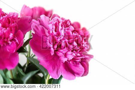 Pink Peonie Flower On Light Background