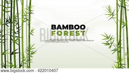 Bamboo Forest Banner. East Asian Tropical Plants Background. Tree Border Elements And Leaves. Straig
