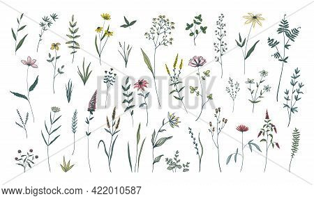 Summer Flowers. Hand Drawn Field Blooming Herbs. Green Stems With Leaves And Blossoms. Decorative Fl