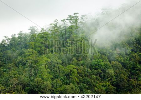 Early morning fog in pine tropical forest, Thailand
