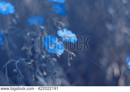 Blue Flowers Of Flax On A Blue Toned Blurred Background. Beautiful Fabulous Art Photo. Selective Sof
