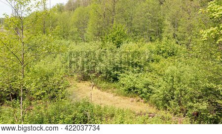 Riparian Stand In Spring With Standing Water From Above, Bialowieza Forest, Poland, Europe