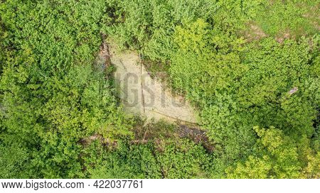 Riparian Tree Stand In Spring With Standing Water From Above, Bialowieza Forest, Poland, Europe