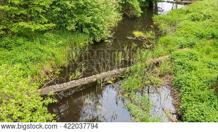 Forest River With Dead Tree Log Lying Over, Bialowieza Forest, Poland, Europe