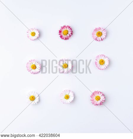 Composition On A Light Gray Background In Flat Lay Style Of Nine Small Buds Of Bellis Flower, Laid O