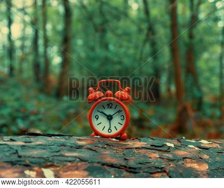 Small red alarm clock on a forest stump. Alarm clock in the forest on the stump of an old fallen tree.