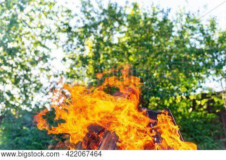 Large Bonfire On The Background Of Trees. Bright Petals Of Fire On A Bright Day. The Bonfire Is At I