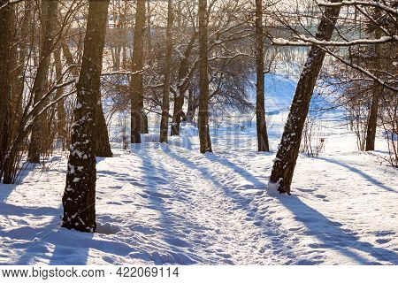Landscape With Winter Nature On A Sunny Day, Descent Through A Birch Forest