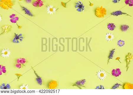 Frame From Natural Colorful Wild Flowers On A Green Background With Copy Space. Spring, Summer Board