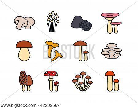Mushrooms Icon Set. Vector Linear Color Icons Contour Shape Outline. Modern Glyph Design. Champignon
