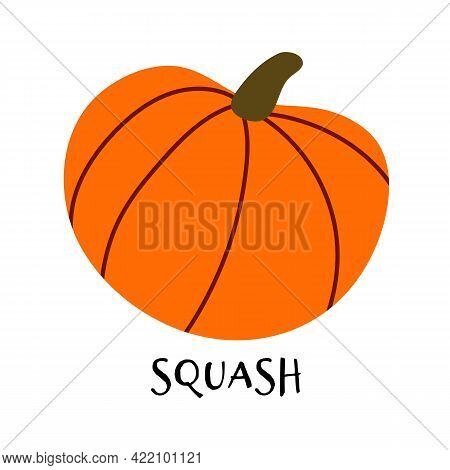 Vector Illustration Of Ripe Squash In Hand Drawn Flat Style. Doodle Fresh Healthy Pumpkin