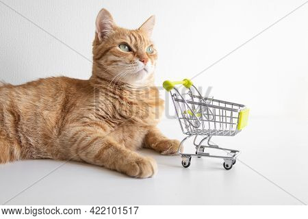 Ginger Cat With Shopping Cart On White Background Looking Curiously. Cute Pet Deciding To Go Buy Gro