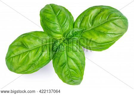 Fresh Green Basil Leaves Isolated On White Background, Top View. Basil Herb Macro. Flat Lay