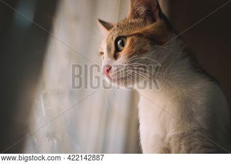 Close Up Portrait Of A Cute Tabby Kitten Looking Through A Window.