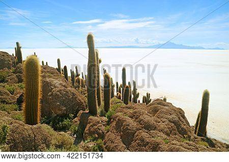 Isla Incahuasi Rocky Outcrop Filled With Large Trichocereus Pasacana Cactus Against The Vast Salt Fl