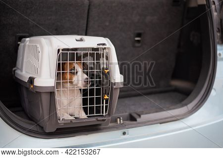 Jack Russell Terrier Dog Sits In A Travel Box In The Trunk Of A Car. Traveling With A Pet