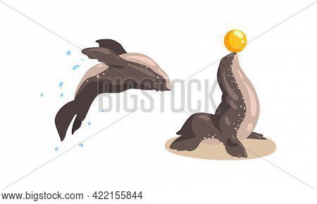 Fur Seal Animals Performing In Dolphinarium Or Oceanarium Cartoon Vector Illustration