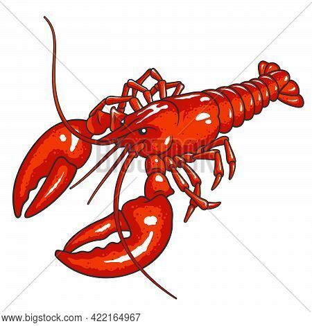 Red Lobster Vector Illustration Isolated On White