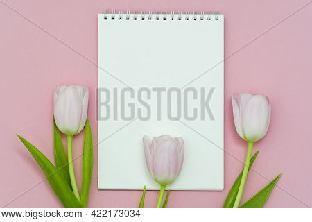 Flat Lay Spring Tulip Flowers And Notebook For Text On Gray Background,flat Lay.