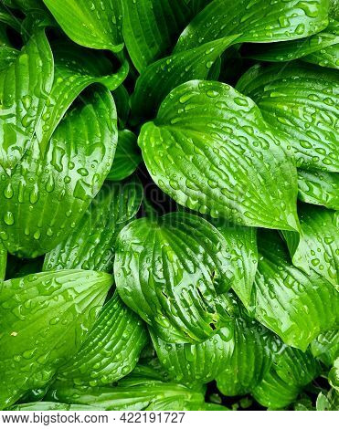 Beautiful Background Made With Young Green Leaves