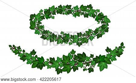 Green Ivy Wreath, Ivy Leaves Crown Garlands. Decorative Frame And Border Isolated On White Backgroun