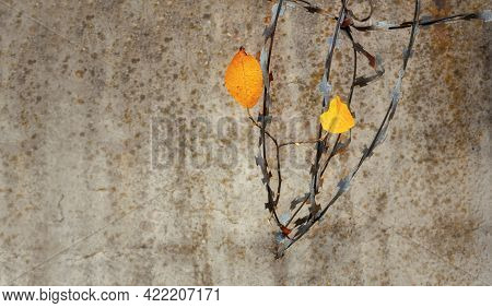 A Worn Wall With Barbed Wire On Top. Two Yellow Leaves As A Symbol Of Hope And Freedom.the Concept O